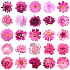 25 pink flowers isolated on white by PhotoVector on Gerbera, Forget Me Nots Flowers, Flower Garden Plans, Collage, Save The Date Invitations, Bullet Journal Ideas Pages, Illustrations, Floral Motif, Resin Art