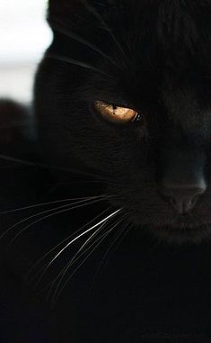 Golden eye, contemplation.