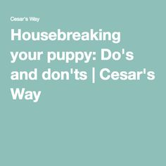 Housebreaking your puppy: Do's and don'ts | Cesar's Way