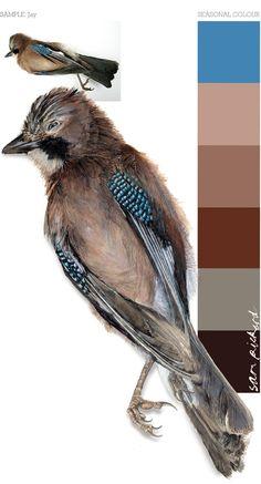 Planet Sam: Colour from the season - Jay blue Exterior Color Schemes, Colour Schemes, Color Combos, Colour Palettes, Copic, Reno, Color Swatches, Season Colors, Color Pallets
