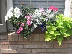 My flowerbox