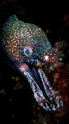 Mosaic Moray Eel by tarasutherland