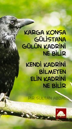 pir sultan abdal icin 7 fikir ilham