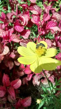 Déjate soy tu abeja!!!