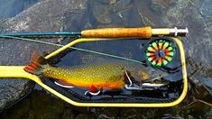 Nice brook trout