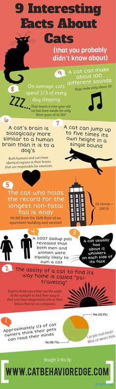 Interesting Facts About Cats - #cat #infographic #facts - More info about cat at Catsincare.com!