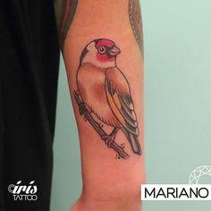 Tattoo by Mariano #goldfinchtattoo #goldfinch #iristattoo Si queres tatuarte con Mariano en Buenos Aires escribinos a color@iristattoo.com.ar o llámanos al 48243197