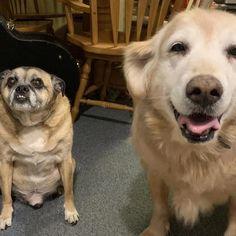 Testimonials and stories from real vegan dogs Pug Mug, Arthritis, Dog Treats, Pugs, Vegan, Sweet, Animals, Candy, Animales