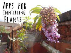 Apps for Identifying Plants | www.kezzabeth.co.uk