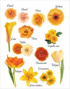 Flores de color naranja