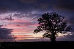 Sunrise and tree - England