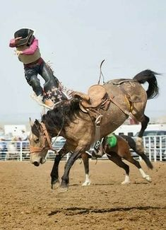 Rodeo Cowboys, Real Cowboys, Cowboy And Cowgirl, Cowboy Pics, Cowboy Photography, Rodeo Events, Rodeo Time, Animals Amazing, Bull Riders