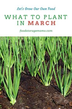Today its all about what to plant in february its the perfect time to get a jump start on your gardening! in some areas you can begin planting outdoors in february companion planting container gardening vegetable garden Veg Garden, Edible Garden, Garden Plants, Garden Beds, Vegetable Gardening, Flower Gardening, Garden Site, Garden Online, Planting A Garden