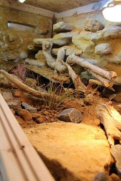 Image IPB You are in the right place about Exotic pets cute Here we offer you the most beautiful pictures … Bearded Dragon Vivarium, Bearded Dragon Enclosure, Bearded Dragon Terrarium, Bearded Dragon Habitat, Bearded Dragon Cage, Reptile Habitat, Reptile House, Reptile Room, Reptile Cage