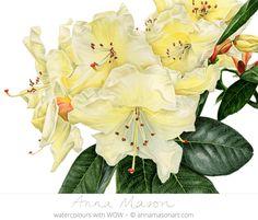 "Rhododendron Moonshine © 2009 ~ annamasonart.com ~ 41 x 31 cm (16"" x 12"") #AnnaMasonNewSite"