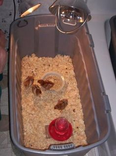 Simple Little BROODER, great site with allllll kinds of brooder IDEAS!! and HOW TO RAISE Chickens!!