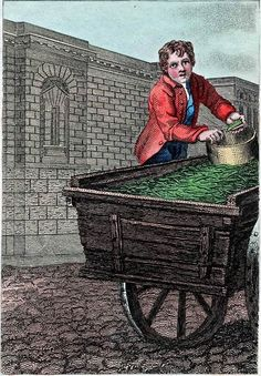 """""""Itinerant Traders of London in their Ordinary Costume with Notices of Remarkable Places given in the Background"""" by William Marshall Craig (1804): """"Green Hastens! The earliest pea brought to the London market is distinguished by the name of """"Hastens,"""" it belongs to the dwarf genus and is succeeded by the Hotspur. This early pea, the real Hastens, is raised in hotbeds and sold in the markets at the high price of a guinea  per quart."""""""