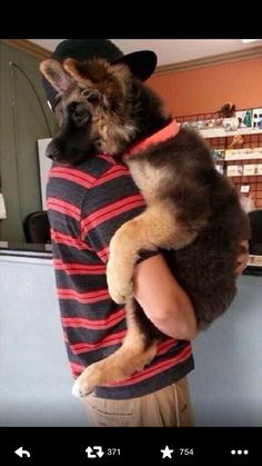 Dogs that are treated properly have the best temperaments and they hold no reservations in showing the love they have received. 7 Ways How To Show Your Dog Love Animals And Pets, Baby Animals, Funny Animals, Funny Dogs, Silly Dogs, Wild Animals, Cute Puppies, Dogs And Puppies, Doggies