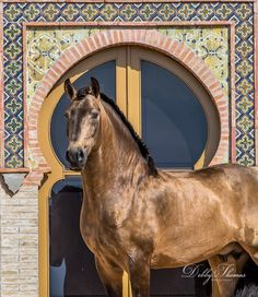 — Fuego - the beautiful,and equally talented. #horse #oriental #style #equine