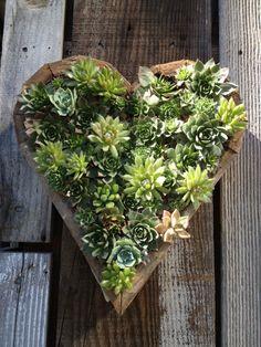 succulent-heart.jpg 500×667 pixels