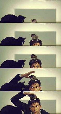 David Tennant & Cats <-- I always seem him as the crazy cool doctor Décimo Doctor, Serie Doctor, Eleventh Doctor, Dr Who, Saga Harry Potter, Michael Sheen, Broadchurch, Fandoms, Dc Movies