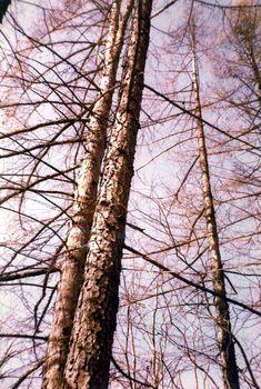 Trunks, Plants, Drift Wood, Flora, Plant, Planting