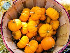 Basketful Of Pumpkins