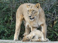 Mother and her silly cub