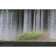 【choi4946】さんのInstagramをピンしています。 《* * *  おはようございます。金曜日。  今日はいい天気になりそうです。 * * * #鳥取 #大山 #木谷沢渓流 #マイナスイオン #苔 #森 #自然 #景色 #滝 #ミゾソバ #奥行き同盟 #gf_japan #Lovers_Nippon #team_jp_西 #ig_japan #as_archive #東京カメラ部 #wu_japan#IGersJP #nat_archive #japan_daytime_view #Loves_Nippon #jp_gallery #instagramjapan #stream #landscape #scenery #forest #moss #nature》