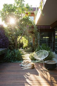 deck-dog-courtyard-garden-Peter-Fudge-july15