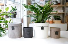 Recycled Paper Cylinder Pot — Folia Collective