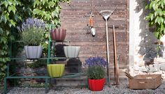 ‪#‎Unfiore‬ plant pots by ‪#‎Serralunga‬ ‪#‎outdoor‬ ‪#‎flower‬ ‪#‎plants‬ ‪#‎garden‬  see more at albertopavanello.co.uk