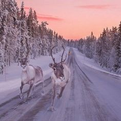 Finland's Lapland is the ultimate winter getaway. Don't miss these things to do and places to see, including reindeer, northern lights, and traditional spas. Beautiful Creatures, Animals Beautiful, Winter Szenen, Winter Travel, Winter Road, Snowy Day, Snowy Woods, Winter Beauty, All Gods Creatures