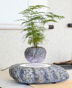 rogeriodemetrio.com: Levitation Air Bonsai