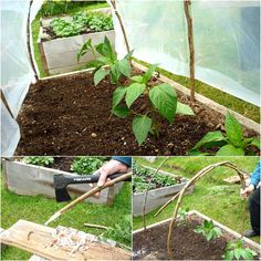garden bed hoop house - here with cedar b/c rot resistant. could try other wood tho - sources ofbamboo or willow. nice alt to pvc