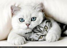 kittiess