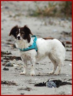 TIERSCHUTZ VEREIN #dog #auslandshund #tierrecht anwalt hundebiss hund http://www.der-tieranwalt.de
