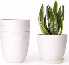 """Mkono Plastic Planters with Saucers, Indoor Set of 5 Flower Plant Pots Modern Decorative Gardening Pot with Drainage for All House Plants, Herbs, Foliage Plant, and Seeding Nursery, Cream White, 6.5"""" #aloeveraplantindoor Foliage Plants, Potted Plants, Indoor Plants, Succulent Plants, Aloe Vera Plant Indoor, Myrtle Tree, Drainage, Plastic Plant Pots, Pot Jardin"""