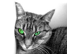 Katzenbild kostenlos herunterladen. Weitersagen!