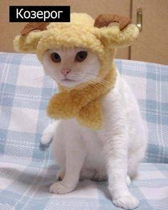 Знаки зодиак у кошек