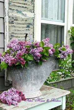 Aiken House & Gardens: Buckets of Lilacs
