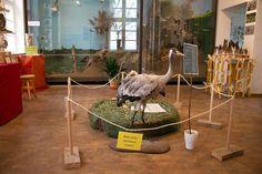 Ausstellung Faszination Kraniche in der Naturschutzstation Schwerin | Kranichausstellung des NABU in der Naturschutzstaion Schwerin (c) Frank Koebsch (2)