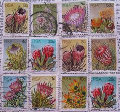 South African postage - proteas - vintage postage stamp ephemera via Etsy Hand Painted Toms, Handmade Books, Fauna, Stamp Collecting, Vintage Postcards, Trees To Plant, Postage Stamps, Ephemera, Flower Power