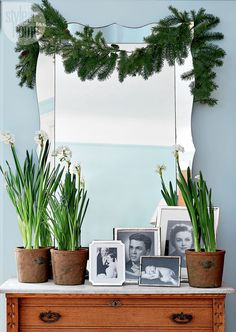 Turquoise, white, and green Christmas colors are an excellent choice for winter holiday decor Green Christmas, Christmas Colors, Christmas Ideas, Flower Decorations, Christmas Decorations, Holiday Decor, Winter Holiday, Checkered Tablecloth, House Of Turquoise