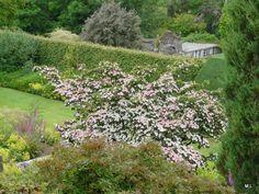 Tuinen van Devon | MijnAlbum - Fotoalbum Gratis Online! The Garden House Mieke Löbker