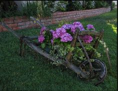 An old wheelbarrow, aged to perfection on our front lawn