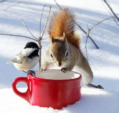 Once in awhile our birds and critters get along at our feeder but usually the squirrels are the bully's!