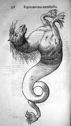 Mythological Creatures, Mythical Creatures, Engraving Illustration, Illustration Art, Arte Obscura, Merian, Occult Art, Sea Monsters, Medieval Art