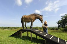 horse agility course - Google Search