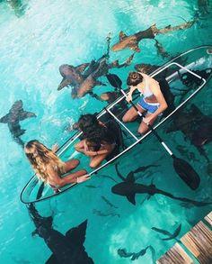 Swimming with lemon sharks in Bora Bora anyone??? Hmm... maybe
